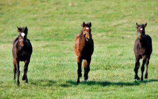 Agriturismo Tenuta i Mandorli - cavalli in libertà