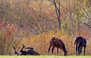 Agriturismo Tenuta i Mandorli - cavalli che giocano