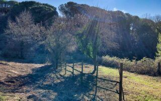 Agriturismo Tenuta i Mandorli - la tenuta