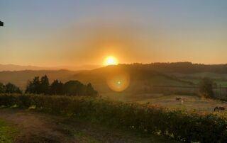 Agriturismo Tenuta i Mandorli - tramonto