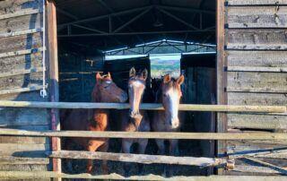 Agriturismo Tenuta i Mandorli - cavalli nella stalla