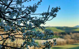 Agriturismo Tenuta i Mandorli - primavera