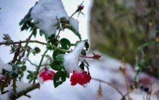 Agriturismo Tenuta i Mandorli - inverno