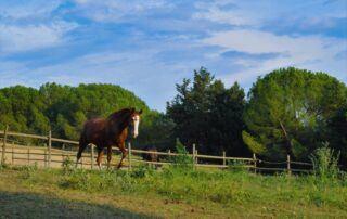 Agriturismo Tenuta i Mandorli - La natura ed i cavalli