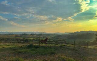 Agriturismo i Mandorli - Cavallo al tramonto