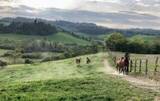 Agriturismo in Toscana - Cavalli al galoppo