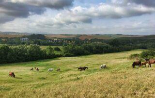 Agriturismo Tenuta i Mandorli - Cavalli liberi nel parco